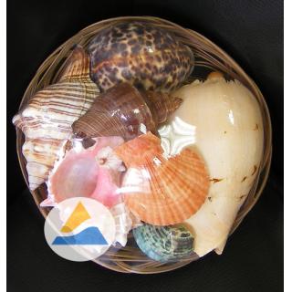 Набор раковин Фрукты моря в корзинке (19см)
