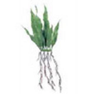 Растение пластиковое с корнями Мох яванский 20см 2шт