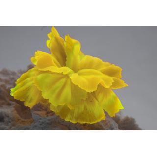 Коралл силиконовый желтый 14х11х9см (SH205SY)