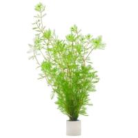 Перистолистник красностебельный (Myriophyllum heterophyllum)