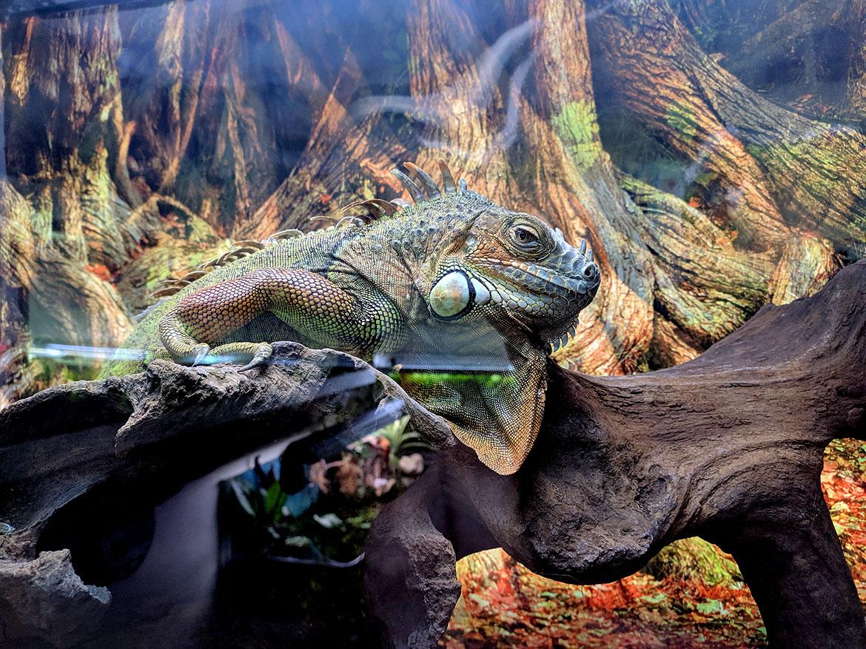 Рептилии в наличии 15.11.19